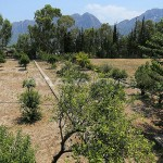 furnished-homes-in-konyaalti-surrounded-by-fruit-trees-001.jpg