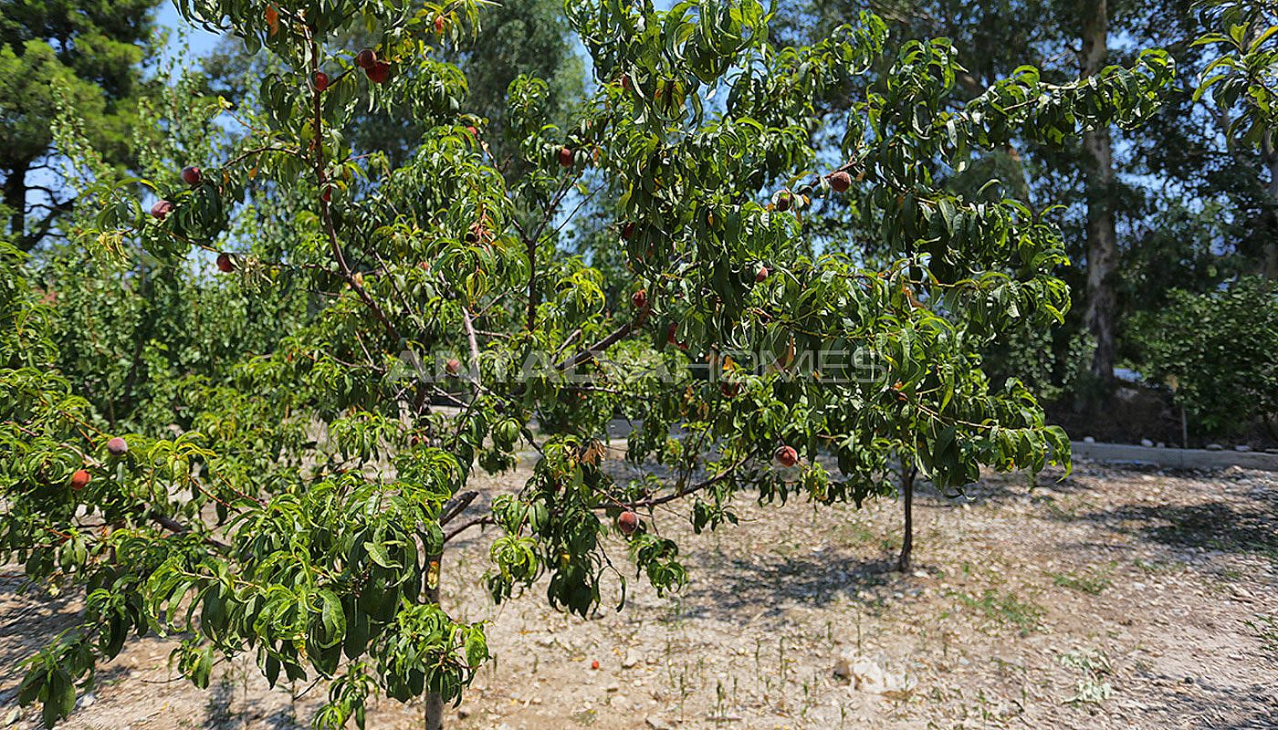 furnished-homes-in-konyaalti-surrounded-by-fruit-trees-004.jpg