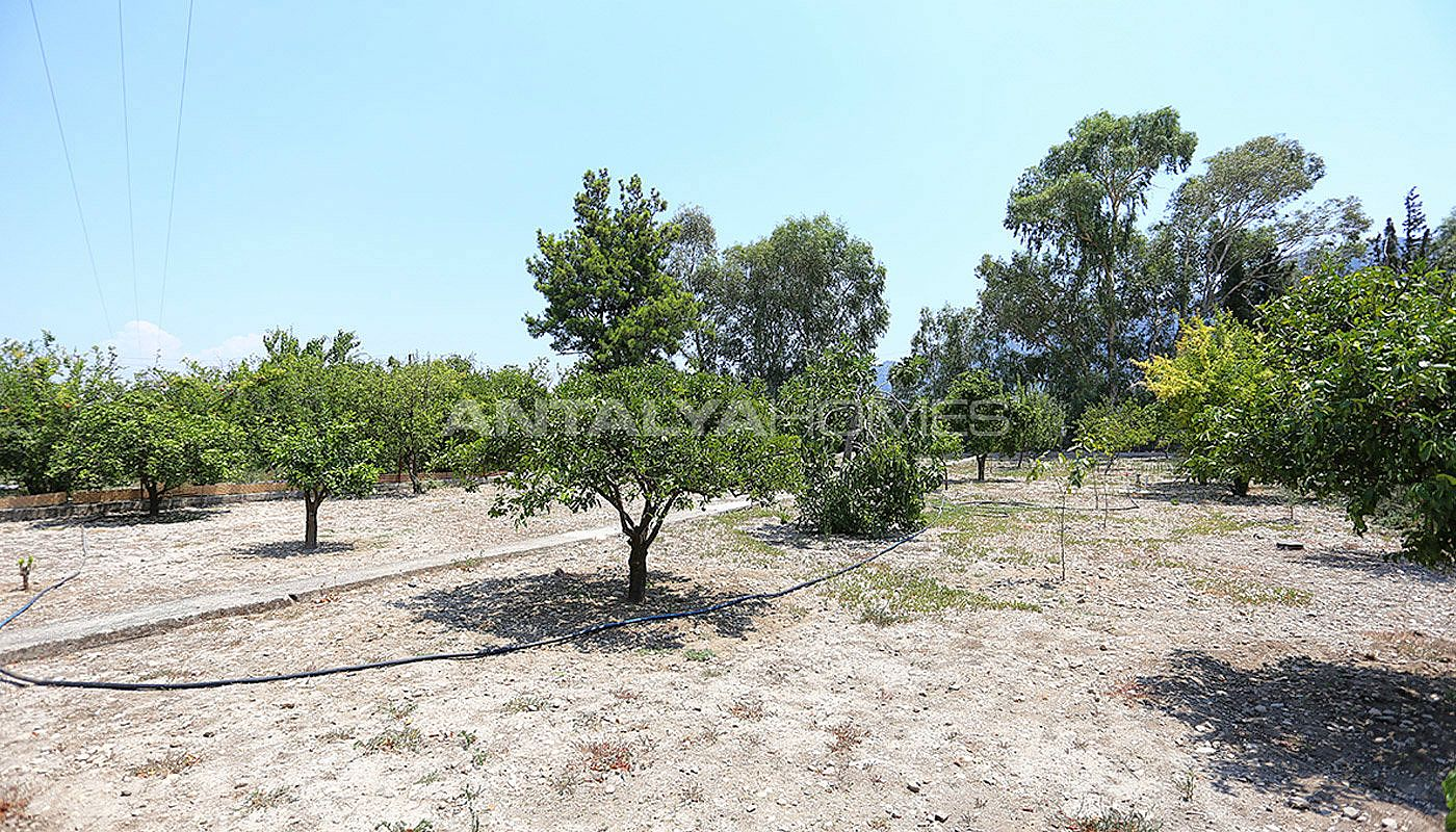 furnished-homes-in-konyaalti-surrounded-by-fruit-trees-009.jpg